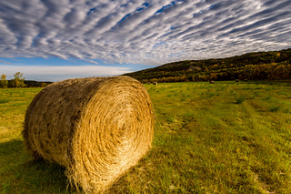 Souris_bend__20150923_636_small2