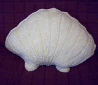 Seashell_small_best_fit