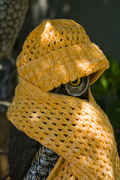 Orange_saphira_cable_set_on_owl_small_best_fit