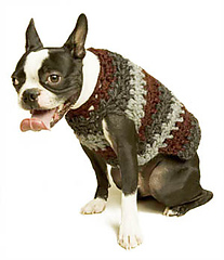 Dog_sweater_3_lb_late_2006_small