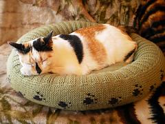 Dog_cat_bed_shiri_designs_02_11_main_small