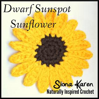 Dwarf_sunflower_sq_small2