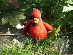 Cardinal_small