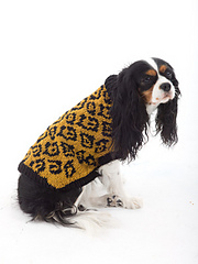 Dog_sweater_small