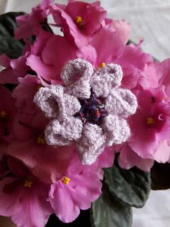 Blumen_3_small2