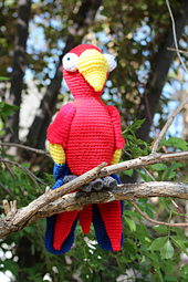 Scarlet_macaw_2_small_best_fit