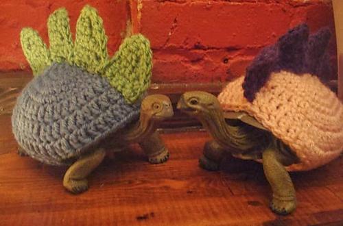 Ravelry Turtle Cozy Pattern By Jess Grant
