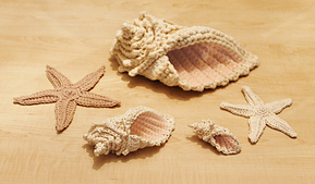 Shells_small_best_fit