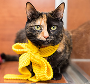 Awla_penelope_cat_and_bow_2_3