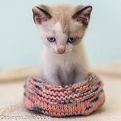White_knit_kitten_jg_2__1__small_best_fit