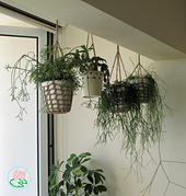 Tomacreations_-_hanging_pot_holders_1_small_best_fit