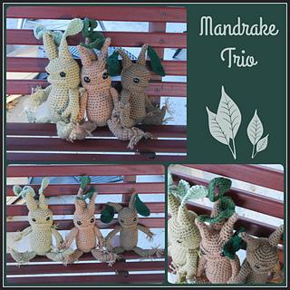 Mandrake_collage_small2