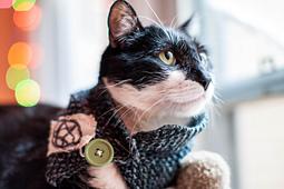 Punk_rawk_kitty_small_best_fit