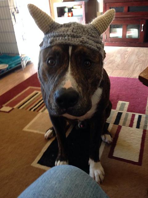 Ravelry Dog Viking Hat Pattern By Mikayla Hoople