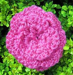 Pinkflower_small