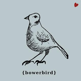 Bowerbird_square_small2