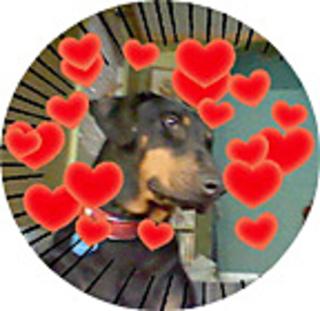 Jasmine-dog_small2