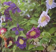 Flower_garland_small_best_fit