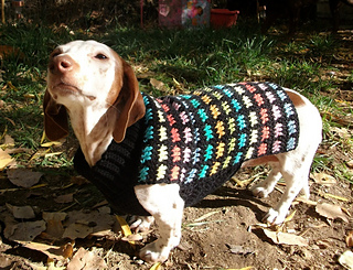 Ravelry Crochet Dachshund Or Small Dog Stain Glass Sweater Pattern