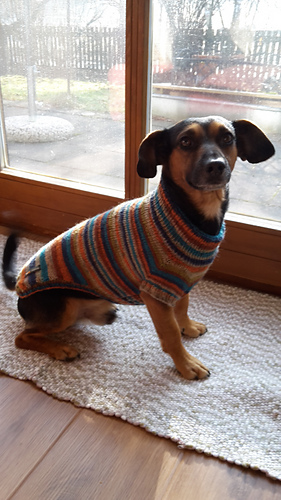 Ravelry Hundepullover Raglan Pattern By Julie Marie