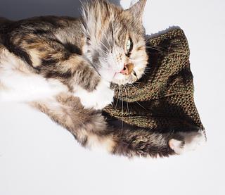 Sq_6_cat_2_small2