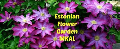 Mkal_logo_ii_medium