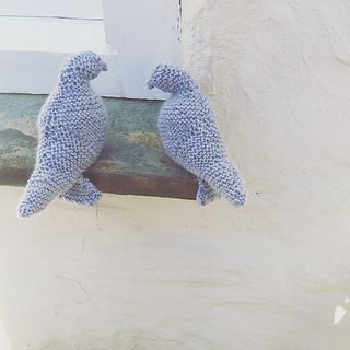 Pigeon5_small2
