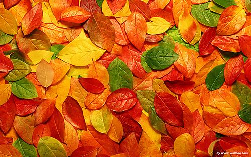 Red-leaf-beautiful-leaves-nature-794685_medium2_medium