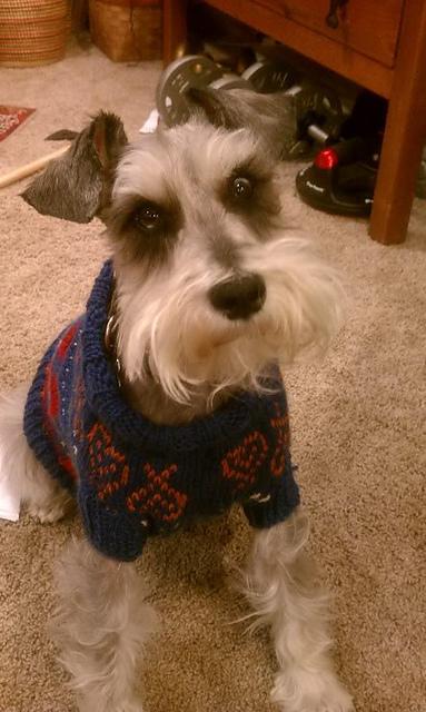 Ravelry Dog Isle Sweater Pattern By Susanna Donato