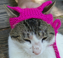 Pussy_hat_for_kitty_cats_view_2_small