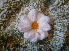 Daisy_on_cosy_small