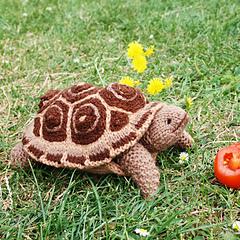 Tortoisepiecrust_small