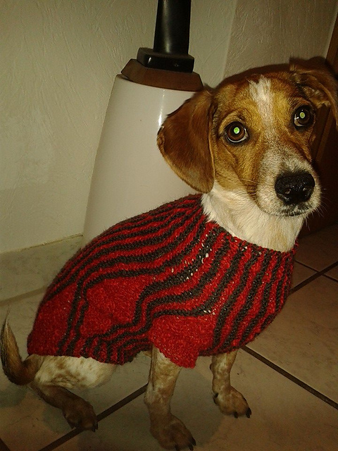 Ravelry: Hundepullover gestrickt pattern by Julie Marie