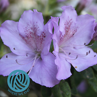 Rhododendron_stamp_small2