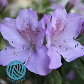 Rhododendron_stamp_small_best_fit