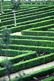Villandry_jardin_small2