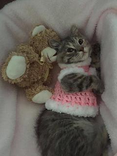 Ravelry Crochet Kitten Sweater Pattern By Lauralee Wellman