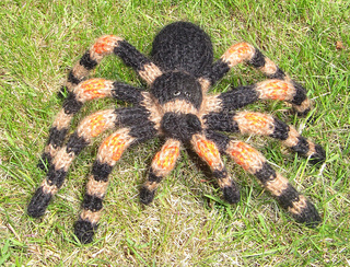 My_pet_tarantula4_small2
