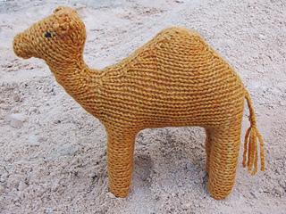 Camel_humphrey_small2