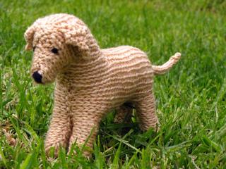 Labrador_dog_2_small2