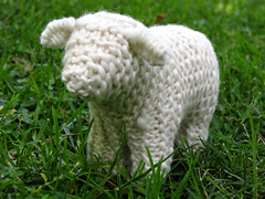 Sheep_5_small