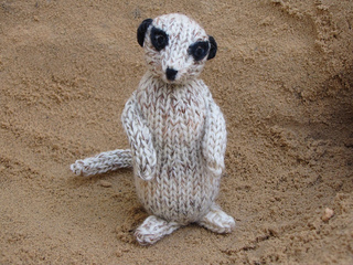 Meerkat_photos_0221_small2