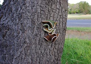 Yarn_bomb_tree_small2