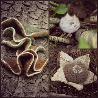 Fungus_among_us_small2
