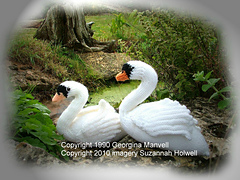 Swancopyright_small