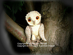Owlcopyright_small
