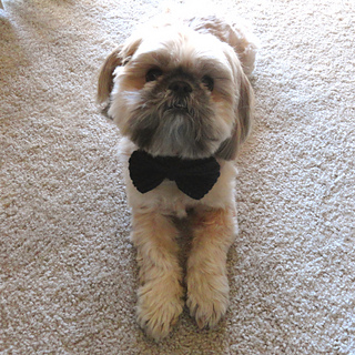 Buster_wearing_bowtie_small2
