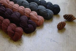 Piper_new_colors_2-7734_small2