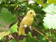 Canary3_small