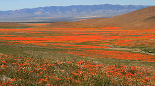 Poppyfield-1920x1067_small_best_fit